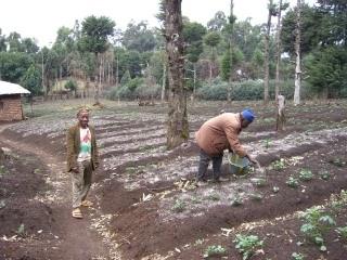 Der exzessive Anbau von Monokulturen zwingt die Bauern zum Einsatz von Kunstdünger
