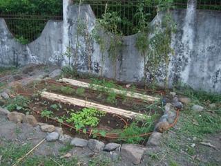 Mischkulturen, Kompostverwertung und Tröpfenbewässerung steigern den Ertrag auf natürliche Weise.