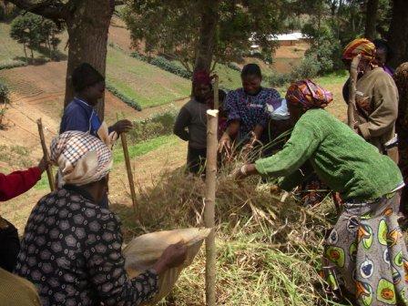 Nchhaltige Landwirtschaft