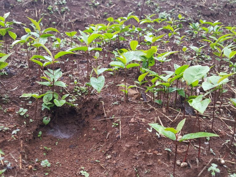 Read more about the article Plant a tree for Cameroon // Dance for a good cause