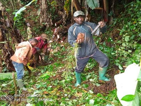 6520 Bäume konnten wir im letzten Jahr in M'Muock (Kamerun) pflanzen!